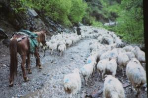 prelekcja-tajemnice-wschodniego-kaukazu_6