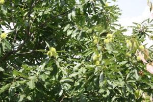 wycieczka-do-slaskiego-ogrodu-botanicznego-w-mikolowie_25