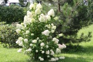 wycieczka-do-slaskiego-ogrodu-botanicznego-w-mikolowie_26