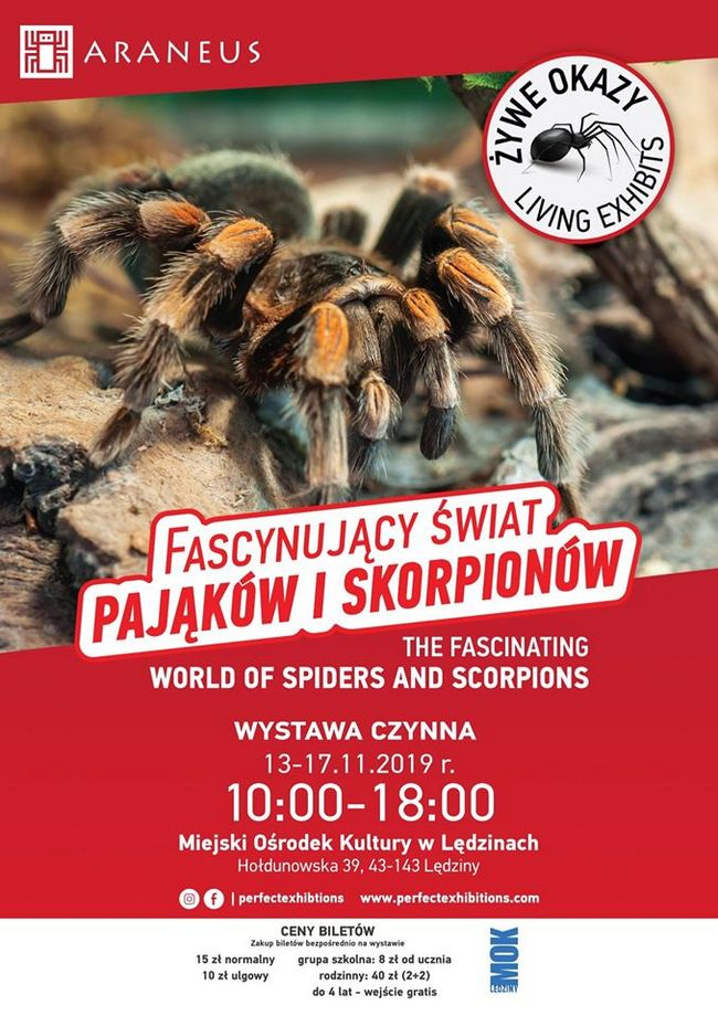 wystawa-fascynujacy-swiat-pajakow-i-skorpionow